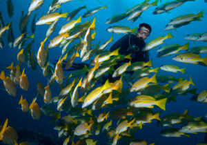 Scuba diver swimming with fish